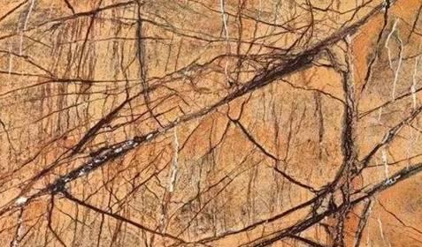 1.雨林棕.jpeg